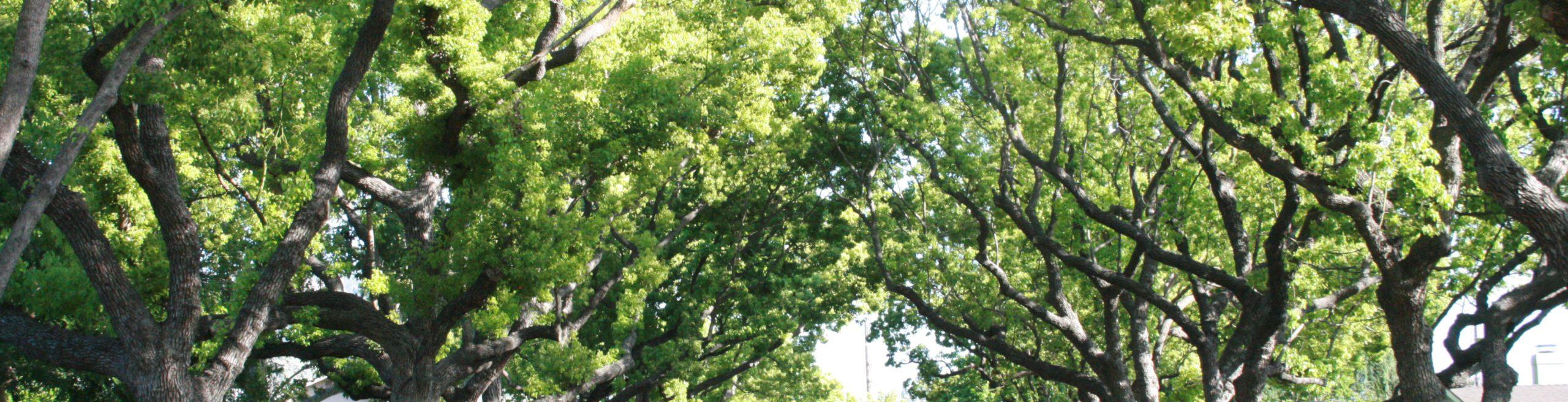 trees_bg_3800x1000_v3